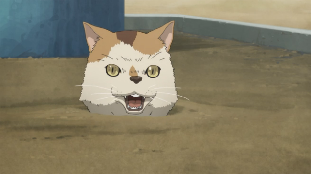 5 PM sad upset annoyed cat trapped in a bunch of sand and dirt